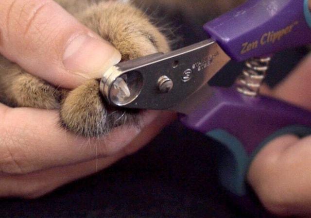 Zen Clipper(ゼンクリッパー)で猫の爪を切る様子