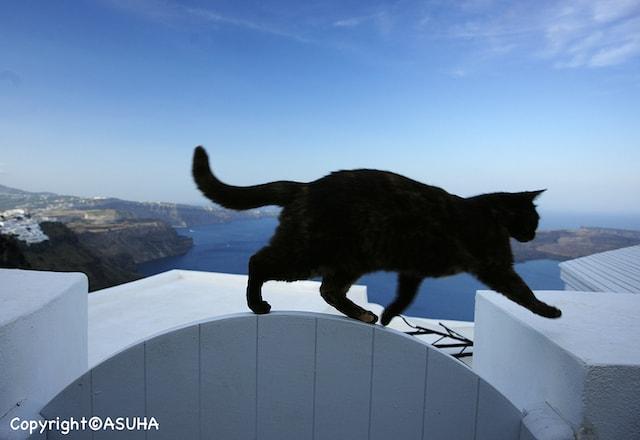 シエスタ写真家「ASUHA-明日葉-(あすは)」さんの猫写真