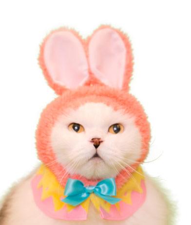 イースターバニーの猫用かぶりもの、ピンクカラー