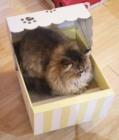 爪とぎ一体型のダンボール猫ベッド「ねこちぐら」