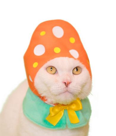 イースターエッグの猫用かぶりもの、オレンジカラー