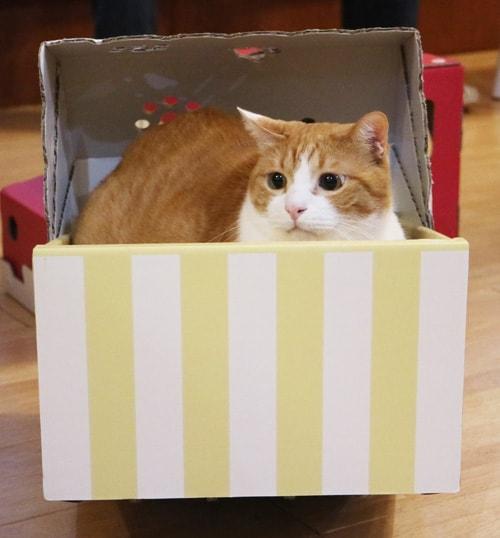 揺れるダンボール製の猫ベッド「ねこちぐら」