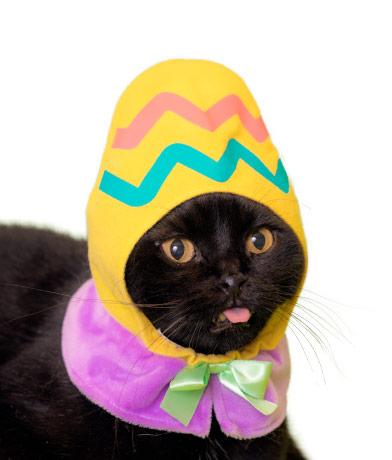 イースターエッグの猫用かぶりもの、イエローカラー