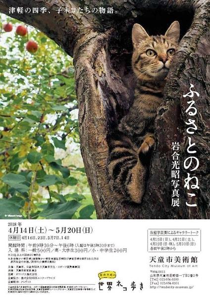 岩合光昭写真展「ふるさとのねこ」山形県で4/14〜開催、映画上映もあるニャ