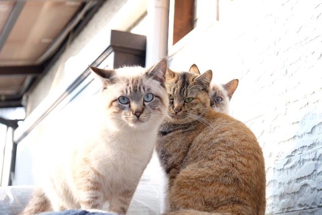 尾道の猫写真