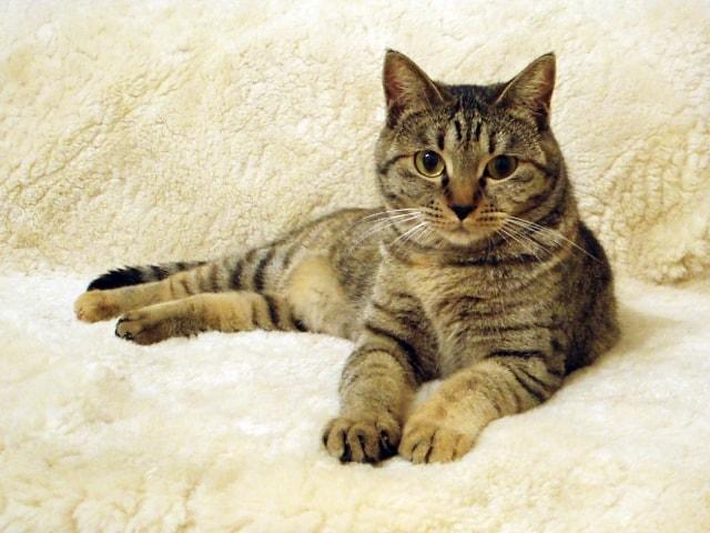 猫を飼うと99.7%幸せになる!飼い主さんへのアンケート調査結果が公表