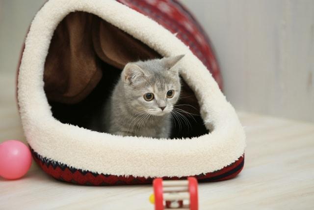 一般的な猫ハウスのイメージ写真