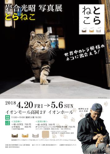 岩合光昭写真展「とらねこ」 in イオンモール高岡のパンフレット