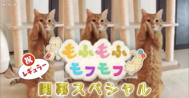 NHKの人気テレビ番組「もふもふモフモフ」