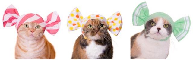 猫に「ねこキャンディちゃん」をかぶってもらったイメージ