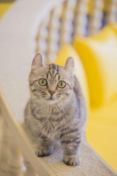 猫カフェMoCHA(モカ)の手すりに乗ってこちらを見つめる猫