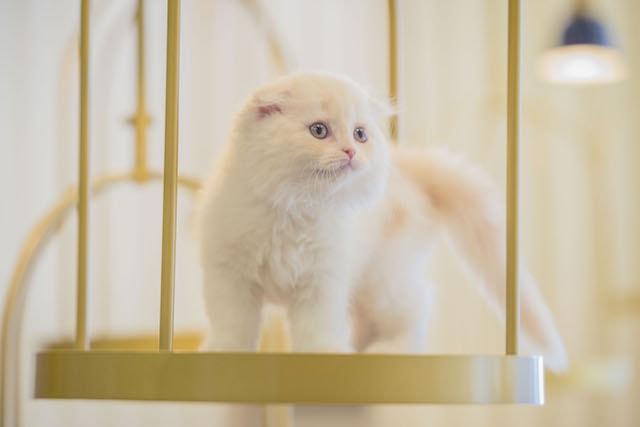 キャットステップに乗る猫 by 猫カフェMoCHA(モカ)京都河原町店