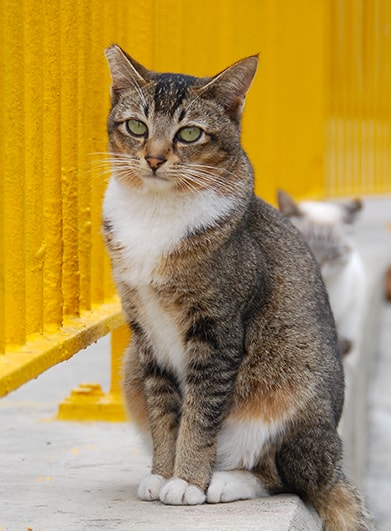 姿勢良くすわる猫の写真 by ばんひろみ
