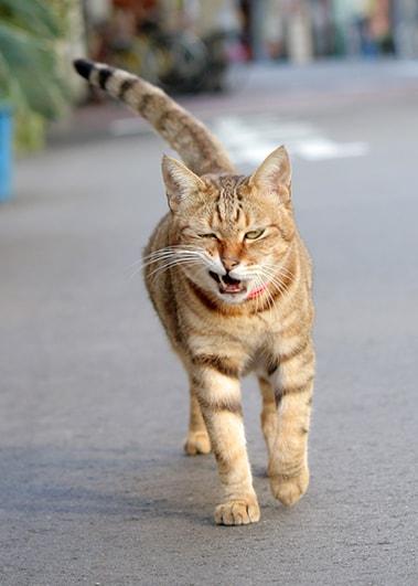 ワル顔の猫 by omu