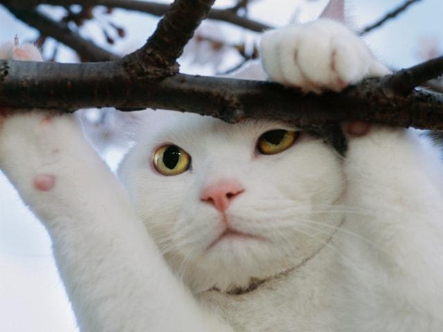 岩合光昭さんのネコ写真展が壱岐島の一支国博物館で4/13から開催