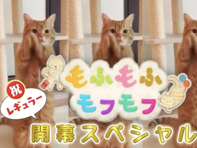 NHKの人気番組「もふもふモフモフ」4/5からレギュラー放送開始