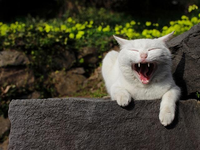 猫好きのための文化祭「らぶねこ展 in 大阪」ゴールデンウィークに開催