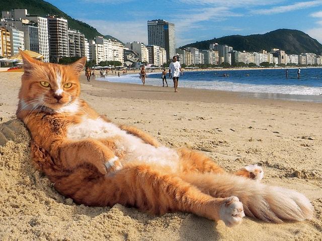 岩合さんの新しい写真展「岩合光昭の世界ネコ歩き2」5月2日より開催決定