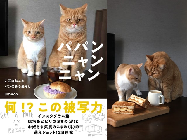 ネコとパンの美味しいフォトエッセイ「パパンニャンニャン 2匹のねことパンのある暮らし」