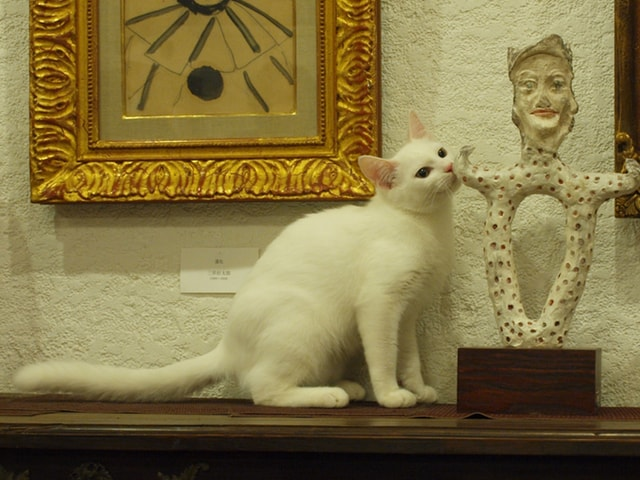 13匹の猫が暮らす美術館で猫アートを展示する「猫ねこ展覧会2018」が開催