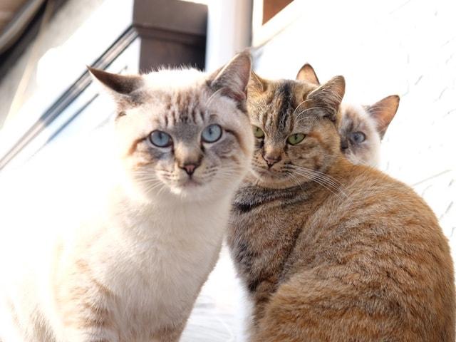 ananの「ネコ特集」第5弾が発売決定!掲載する猫の写真を募集中