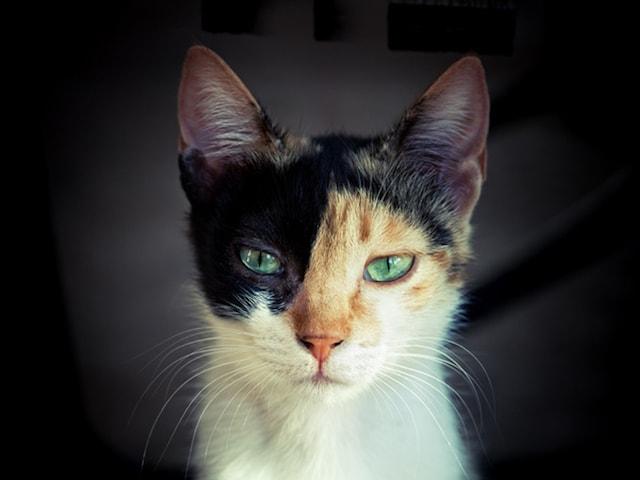 雑誌anan 2108号「にゃんこLOVE ふたたび」のイメージ猫写真