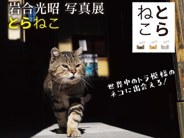 岩合光昭 写真展「とらねこ」富山県のイオンモール高岡で開催中