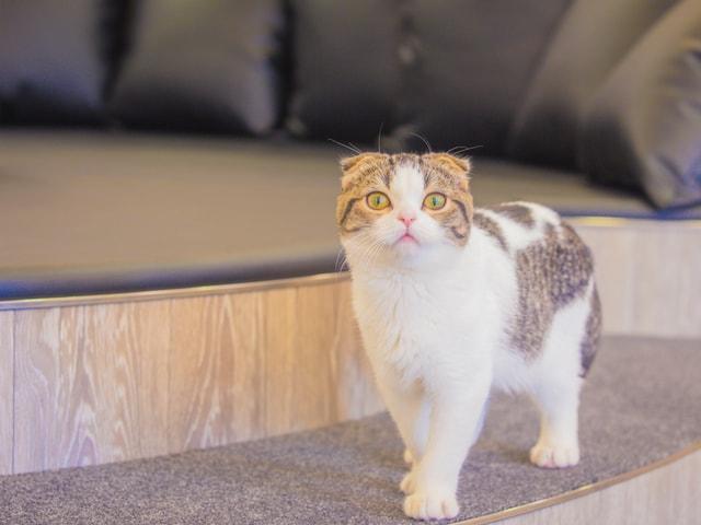 おしゃれな猫カフェMoCHA(モカ)、京都・河原町に新店舗をオープン