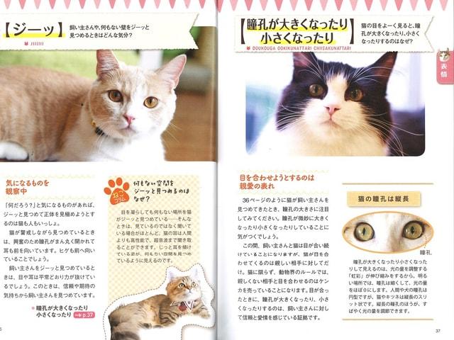 動物学者が解説!仕草や行動から猫の気持ちが分かる「ねこ語辞典」