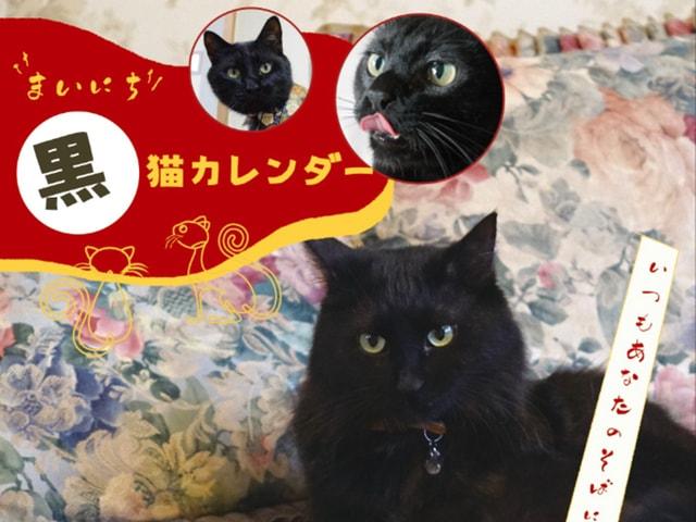 黒猫だらけの日めくりカレンダー「まいにち黒猫」保護猫カフェから発売