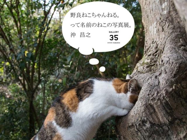 京都のギャラリーで猫写真家・沖昌之さんの個展などがGWに開催