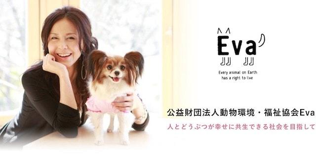 杉本彩さんが理事長を務める「公益財団法人動物環境・福祉協会Eva」