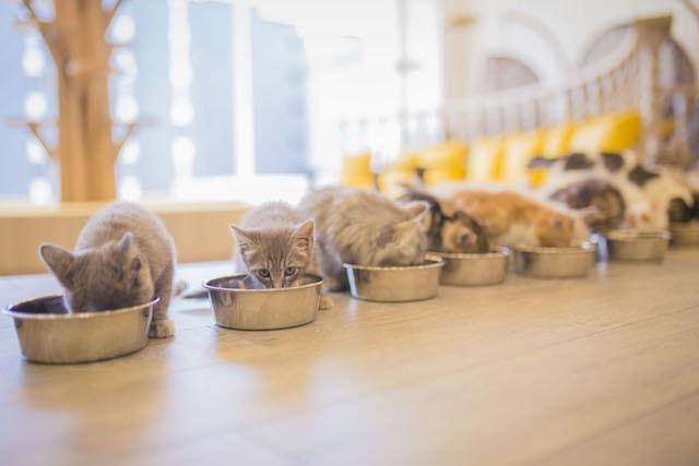 こちらをチラ見する猫 by 猫カフェMoCHA(モカ)京都河原町店のご飯タイム