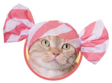 キャンディをイメージした猫用のかぶりもの、ストロベリー