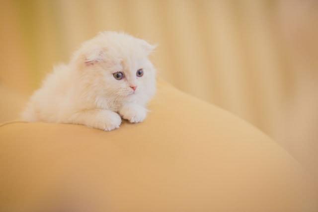 猫カフェMoCHAの猫スタッフ