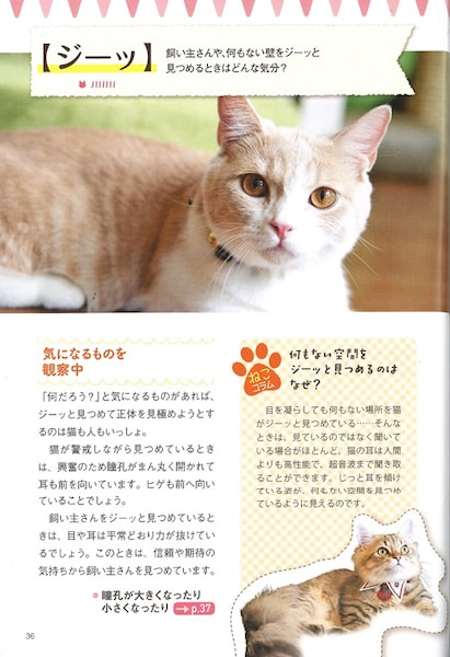 猫が飼い主や壁をジーッ見つめる理由 by ねこ語辞典
