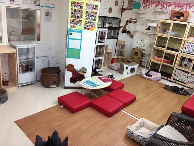 保護猫カフェ・猫の館ME(ミィ)の室内イメージ