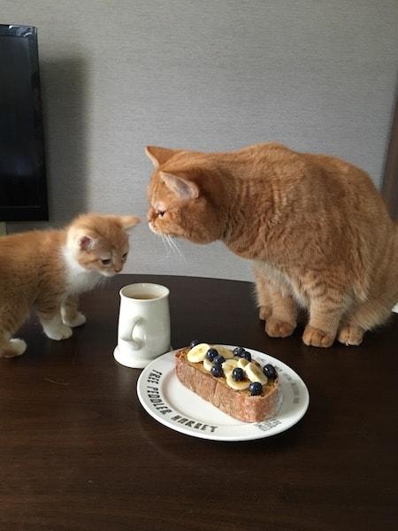 パンとオス猫の「おまめ」とメス猫の「こまめ」