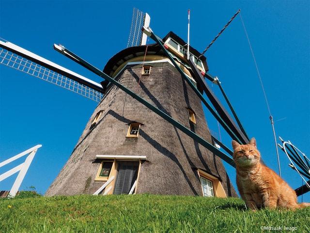 風車を背にするネコ by 岩合光昭の世界ネコ歩き2