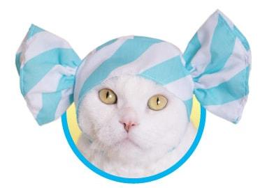 キャンディをイメージした猫用のかぶりもの、ソーダ