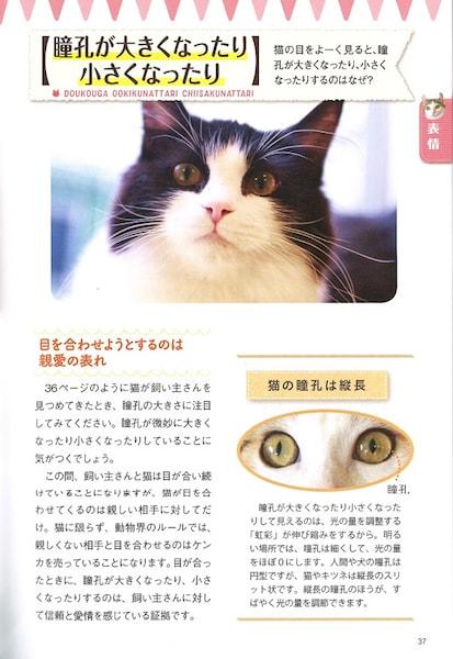 猫の瞳孔の大きさが変化する理由 by ねこ語辞典