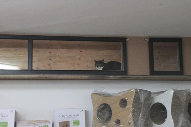 猫の館ME(ミィ)にいる保護猫