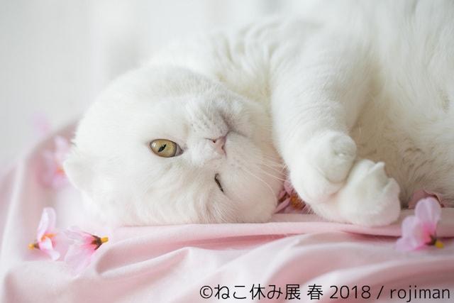 春らしい白猫の写真 by rojiman