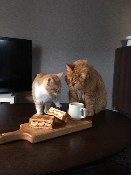 パンと猫の写真集