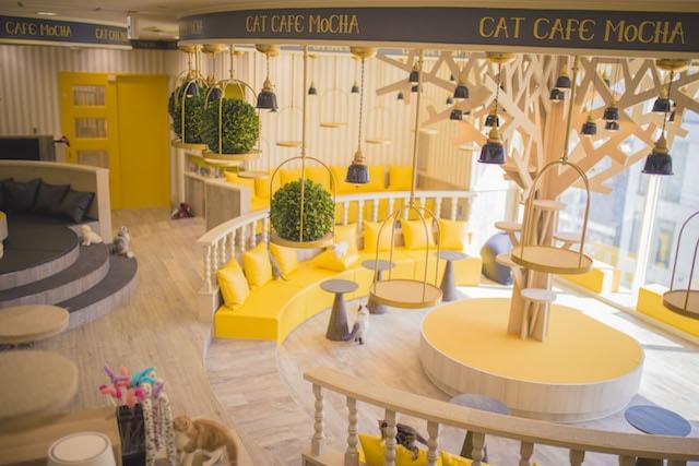 猫カフェMoCHA(モカ) 京都河原町店 店内イメージ