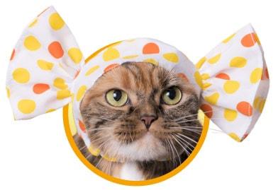 キャンディをイメージした猫用のかぶりもの、オレンジ