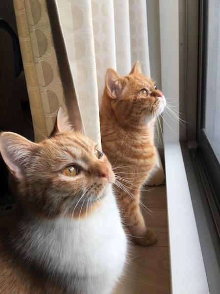シンクロ率の高い2匹の猫  by パパンニャンニャン