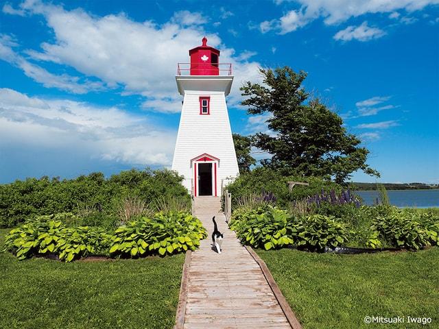 美しい風景を歩くネコ by 岩合光昭の世界ネコ歩き2
