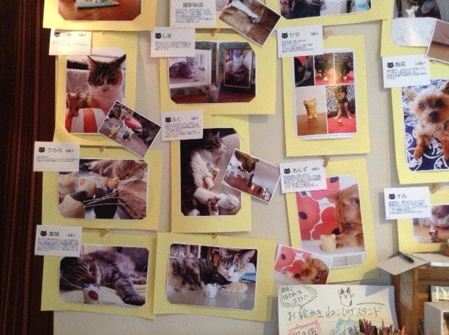 ねこひげスタンド写真展の展示写真1