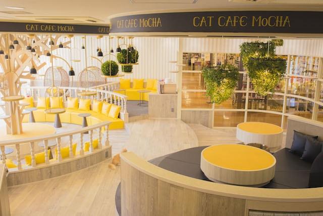 猫カフェMoCHA(モカ) 京都河原町店の内装は木材と黄色がコンセプトカラー